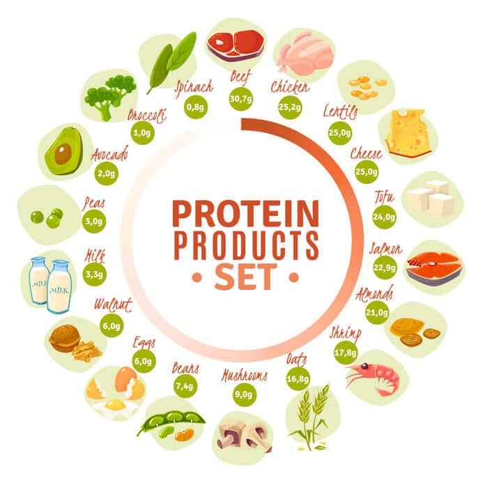 proteinhaltige Lebensmittel Kreisdiagramm