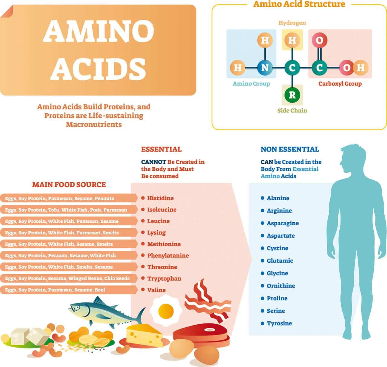 Vorteile von essentiellen Aminosäuren EAAs
