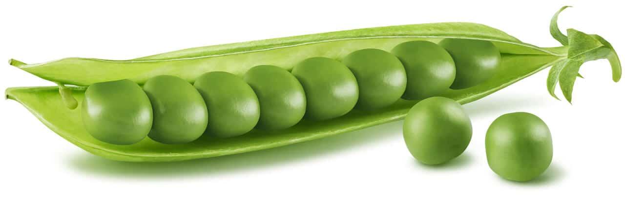 Grüne Erbsenschote reich an Erbsenprotein
