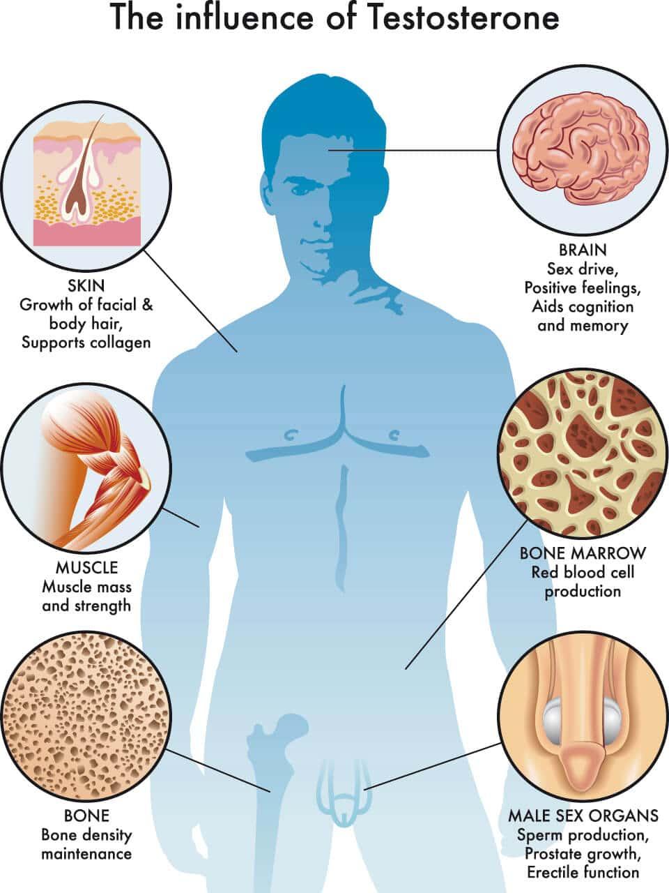 Wirkung von Testosteron und Mangel erkennen